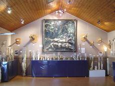 icelandic-phallological-museum